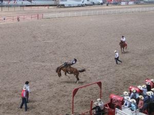Bareback bronc rider trying to avoid whiplash