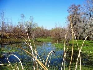 Slidell swamp